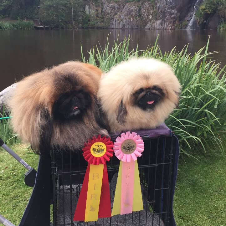Ronneby Hundutställning